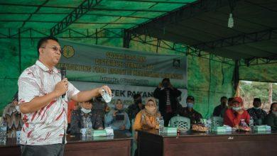 Photo of Dukung Food Estate di Labangka, Gubernur NTB Serahkan 200 Ekor Sapi