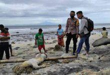 Photo of Ditemukan Mayat Tanpa Identitas Bercelana Hitam Pendek Bergaris Putih, Hampir Tiga Minggu di Laut Sekotong