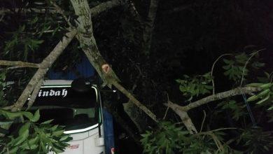 Photo of Tersangkut Pohon di Jalan Raya Kopang, Mobil Avanza Tabrak Pantat Truck Fuso