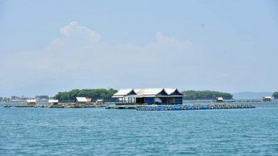 Photo of Pemprov NTB Komitmen Dukung Upaya Konservasi Laut dan Pesisir